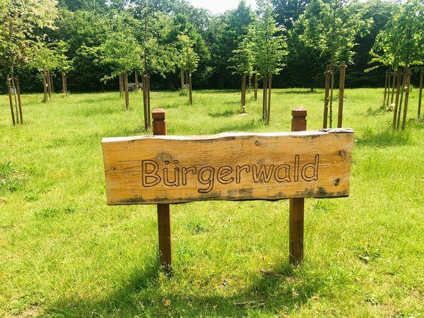 Grünes Engagement: Bäume für den Bürgerwald in Harsewinkel